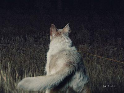 Póster de 'It Comes at night' destacada